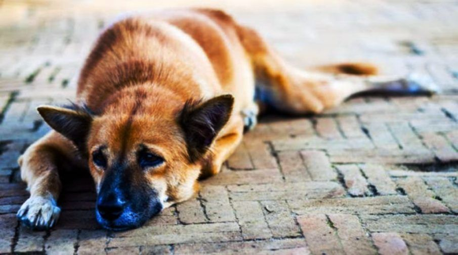 Central Corfu Municipality: Special care for stray animals