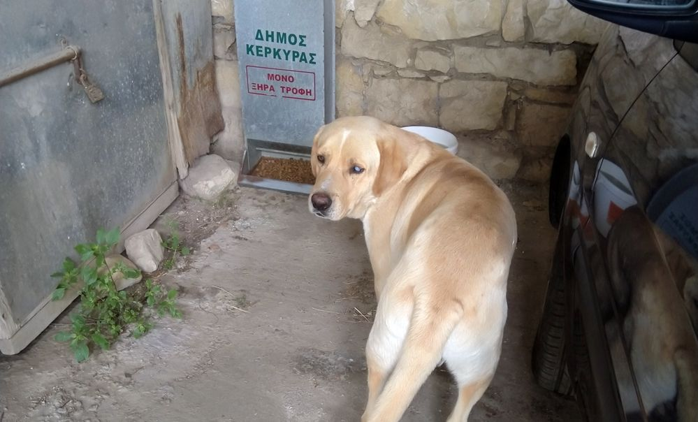 Update on Municipal care programme for strays