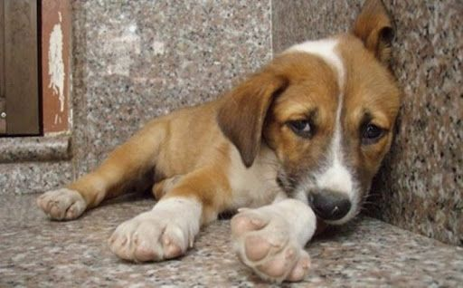Ερώτηση (και) Αυλωνίτη σχετικά με την κατασκευή και συντήρηση καταφυγίων αδέσποτων ζώων